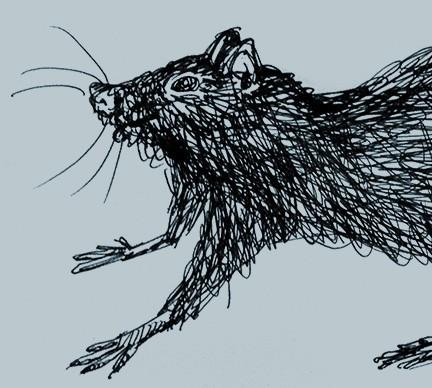 Rat illustration inked by Limor Farber